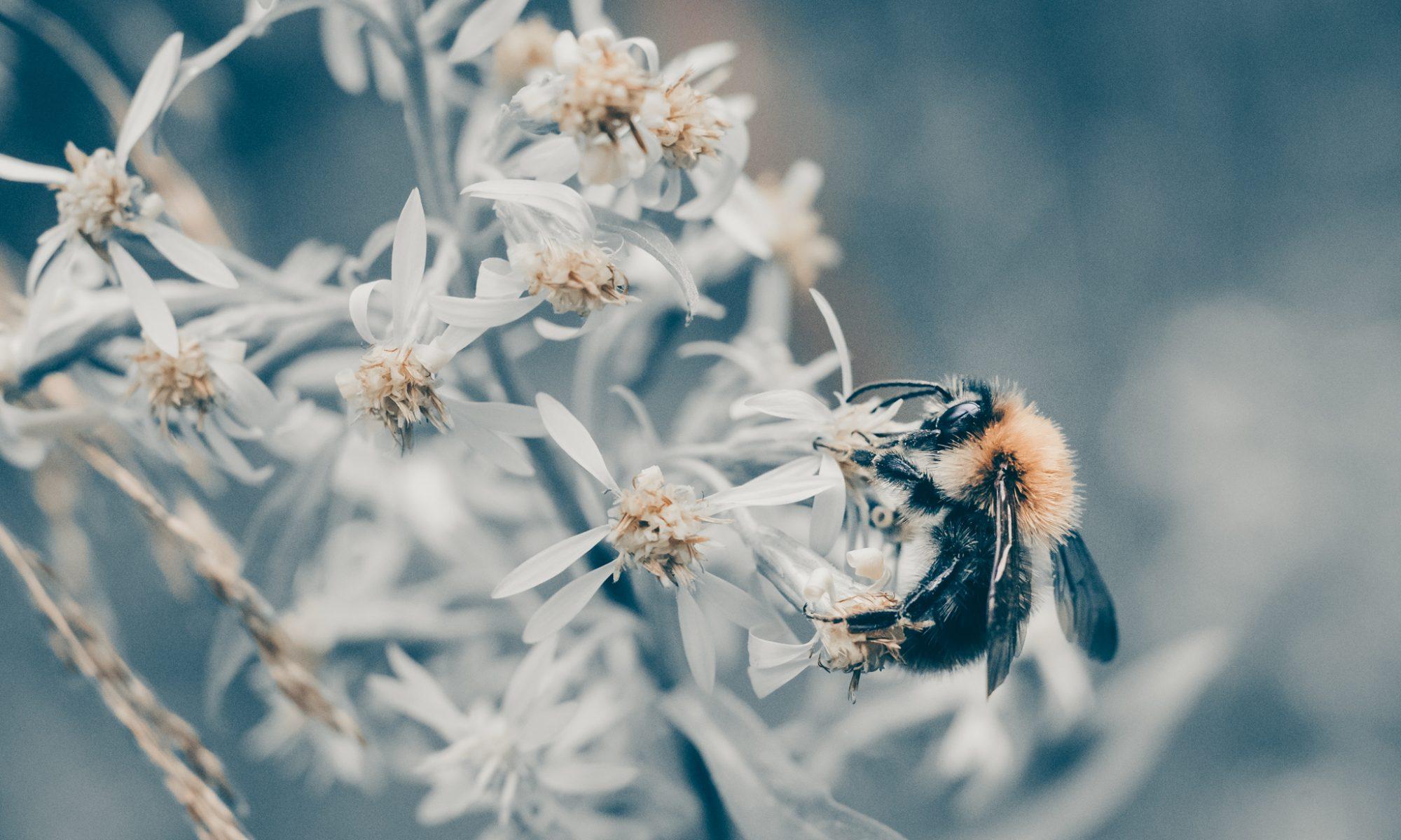 Mehiläiskummit